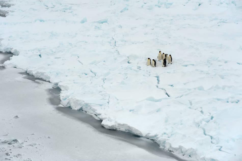 Etwa 14'000 verschiedene Tierarten leben im Weddellmeer – doch der Schutz des Weddellmeeres wird weiterhin blockiert. (Foto: Stefan Gerber)