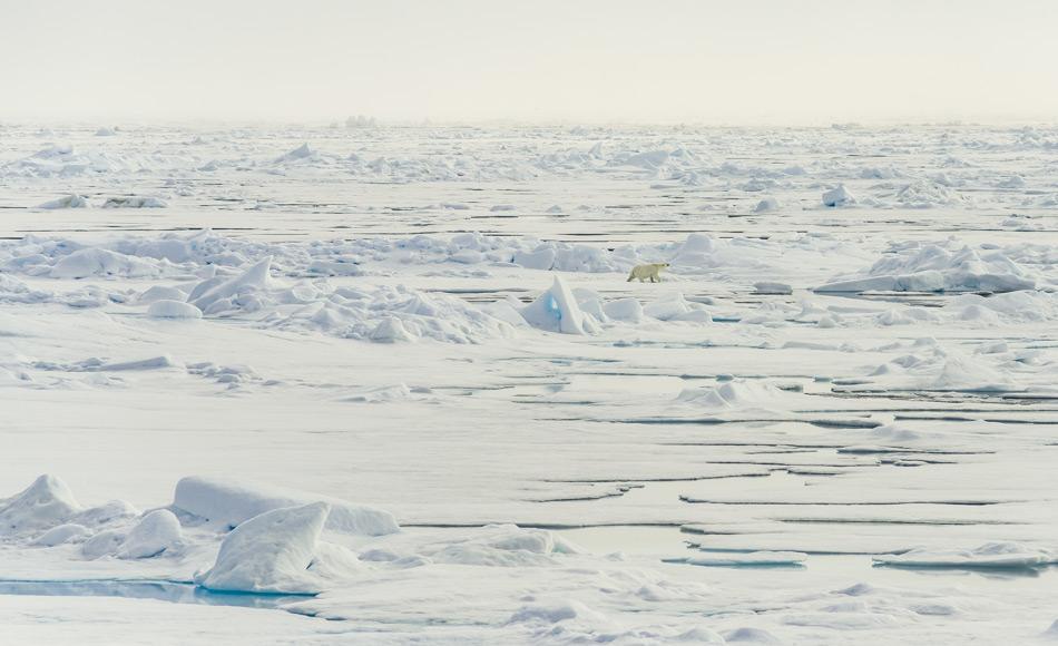 Das arktische Meereis ist in den letzten 40 Jahren um mehr als die Hälfte geschrumpft. Dies hat einen großen Einfluss auf das Klima, die Albedo und das arktische Ökosystem, einschliesslich Eisbären. Daher ist es enorm wichtig, die zukünftige Entwicklung der Meereisbedeckung zu verstehen und korrekt vorherzusagen. Bild: Katja Riedel